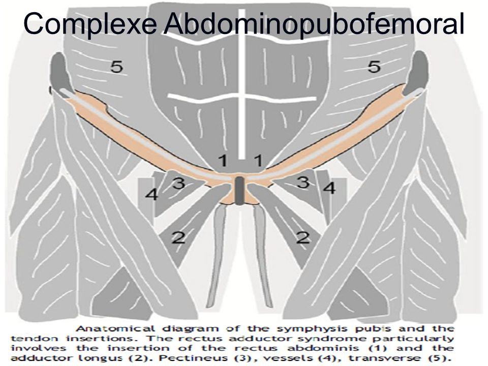 8 Complexe Abdominopubofemoral