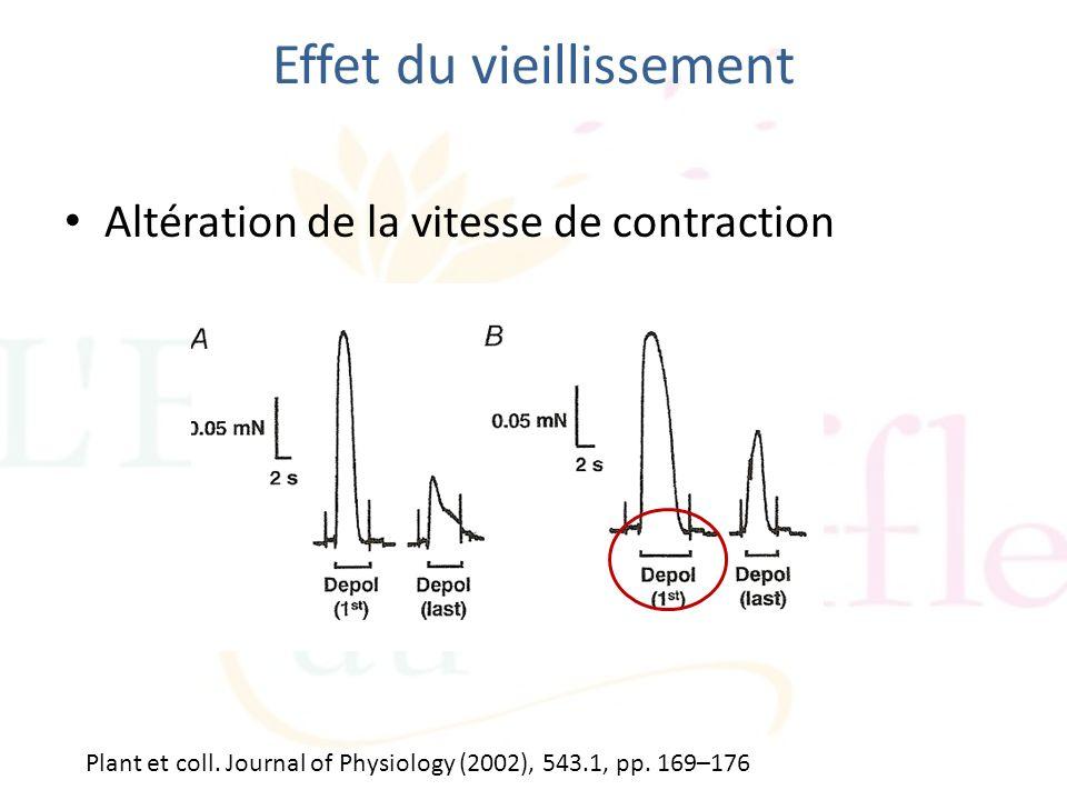 Effet du vieillissement Altération de la vitesse de contraction Plant et coll. Journal of Physiology (2002), 543.1, pp. 169–176