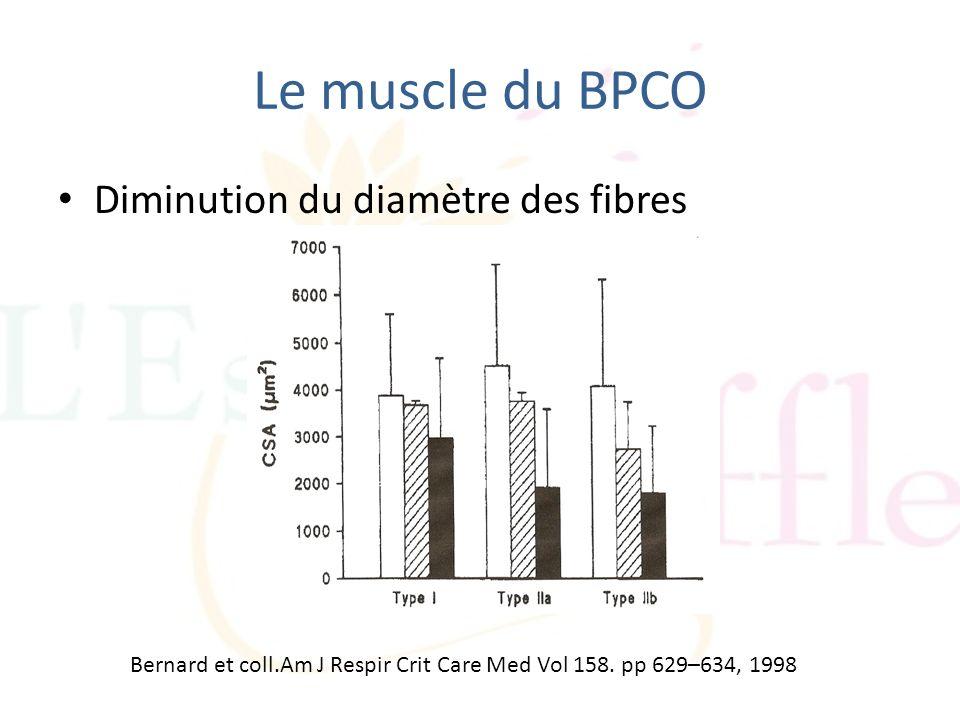 Le muscle du BPCO Diminution du diamètre des fibres Bernard et coll.Am J Respir Crit Care Med Vol 158. pp 629–634, 1998
