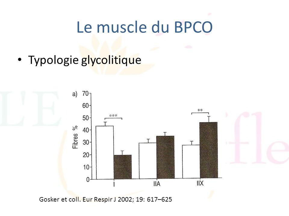 Le muscle du BPCO Typologie glycolitique Gosker et coll. Eur Respir J 2002; 19: 617–625