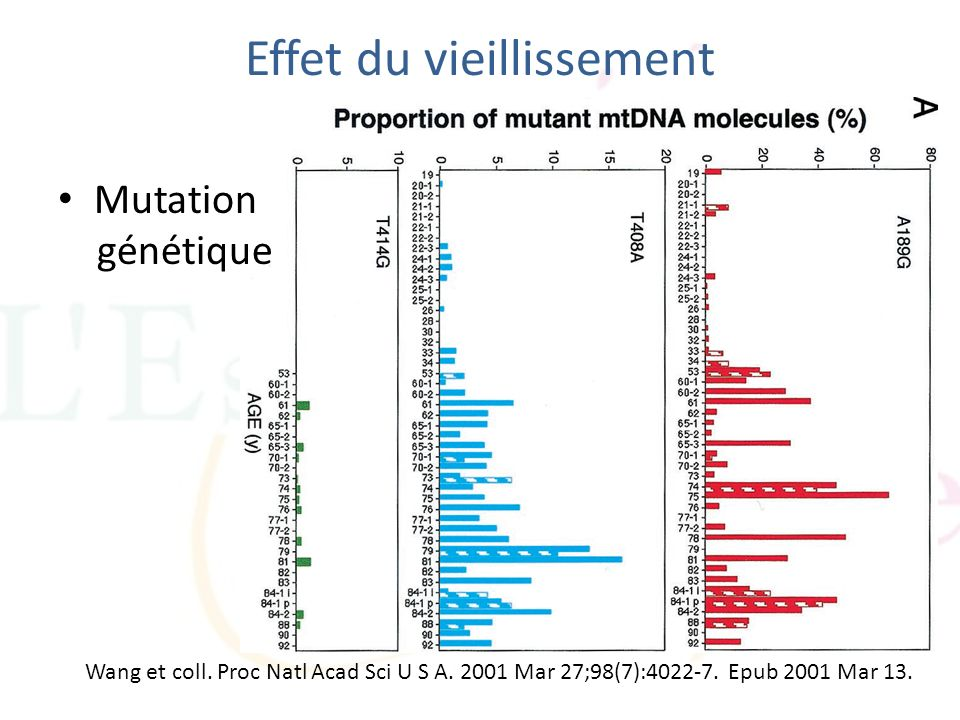 Effet du vieillissement Mutation génétique Wang et coll. Proc Natl Acad Sci U S A. 2001 Mar 27;98(7):4022-7. Epub 2001 Mar 13.