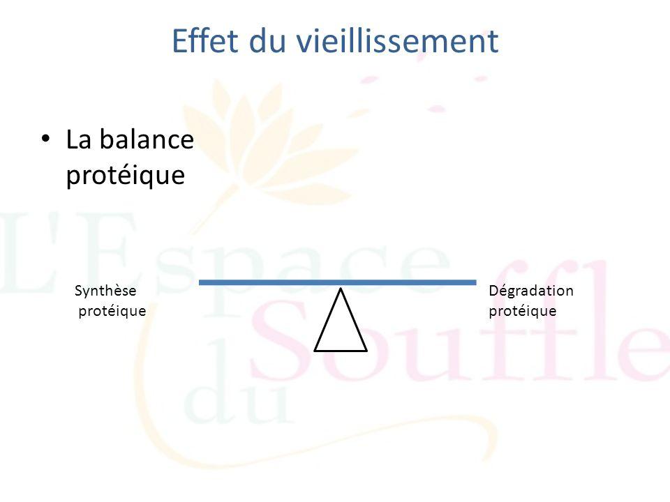 Effet du vieillissement La balance protéique Synthèse protéique Dégradation protéique