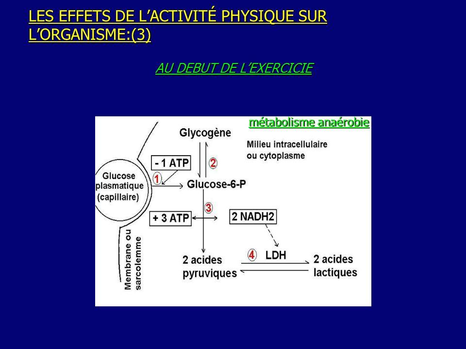 LES EFFETS DE LACTIVITÉ PHYSIQUE SUR LORGANISME:(4) EXERCICE MUSCULAIRE PROLONGE du débit sanguin musculaire du débit sanguin musculaire oxydation du glucose et des AGL (cycle de Krebs) oxydation du glucose et des AGL (cycle de Krebs) de la synthèse des lactates de la synthèse des lactates métabolisme aérobie