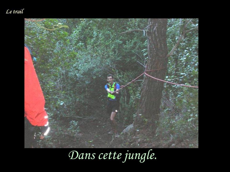 Dans cette jungle. Le trail