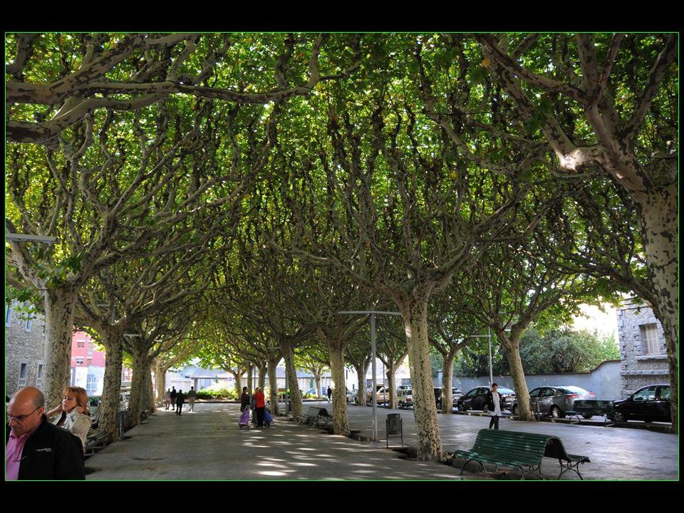 En pleine ville une promenade ombragée avec des arbres bienveillants