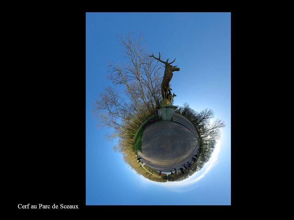 Cerf au Parc de Sceaux