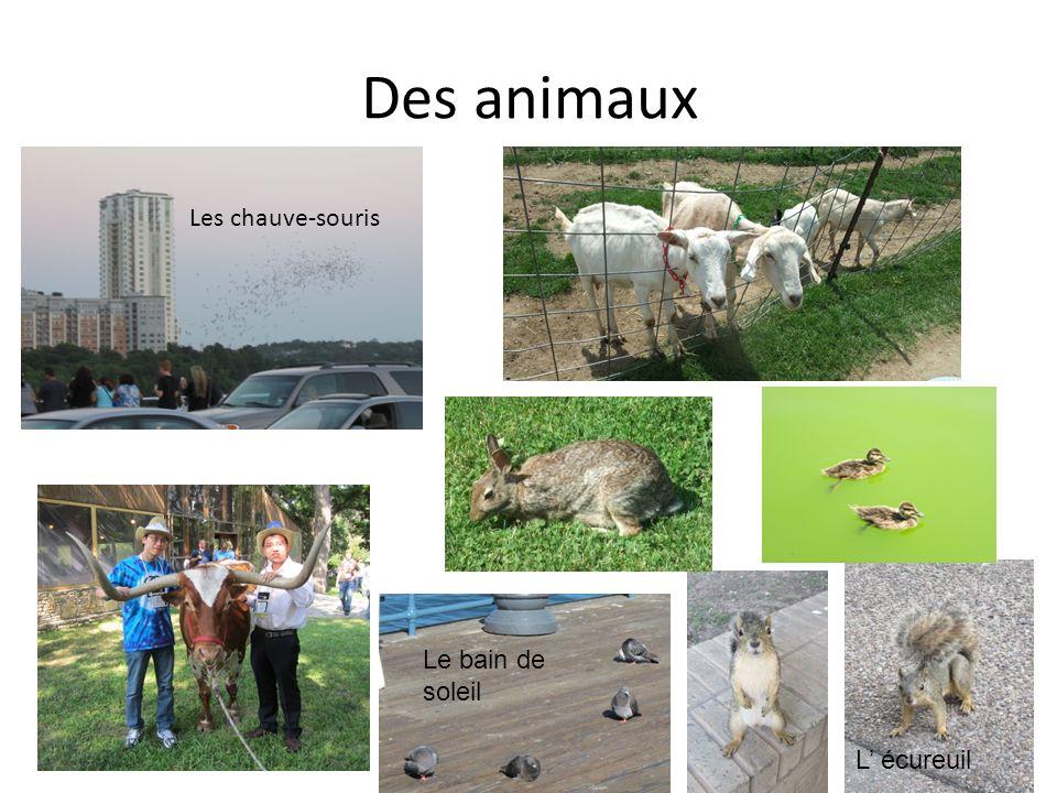 Des animaux Les chauve-souris L écureuil Le bain de soleil