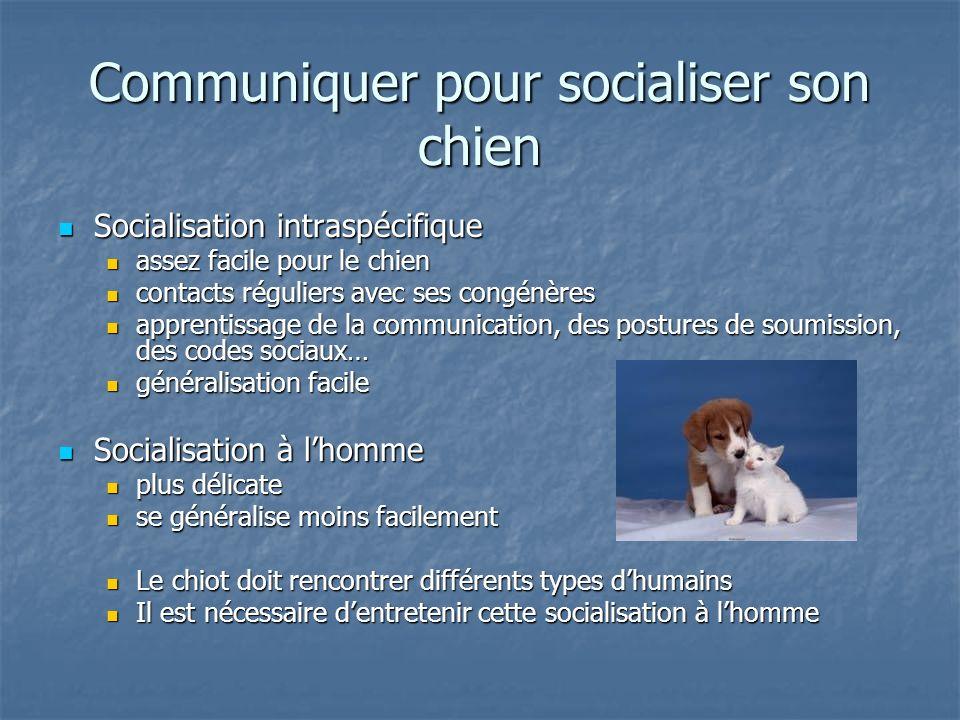 Communiquer pour socialiser son chien Socialisation intraspécifique Socialisation intraspécifique assez facile pour le chien assez facile pour le chie