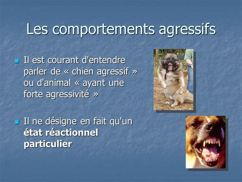 Il est courant d'entendre parler de « chien agressif » ou d'animal « ayant une forte agressivité » Il est courant d'entendre parler de « chien agressi