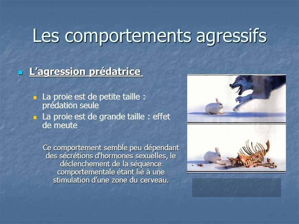 Lagression prédatrice Lagression prédatrice La proie est de petite taille : prédation seule La proie est de grande taille : effet de meute Ce comporte
