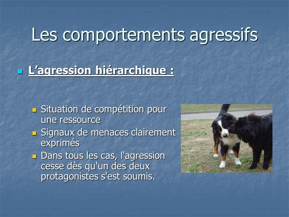 Les comportements agressifs Lagression hiérarchique : Lagression hiérarchique : Situation de compétition pour une ressource Situation de compétition p