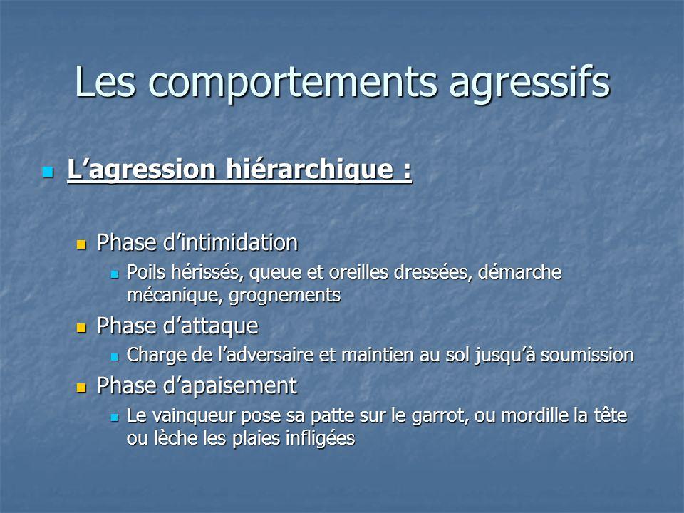 Lagression hiérarchique : Lagression hiérarchique : Phase dintimidation Phase dintimidation Poils hérissés, queue et oreilles dressées, démarche mécan