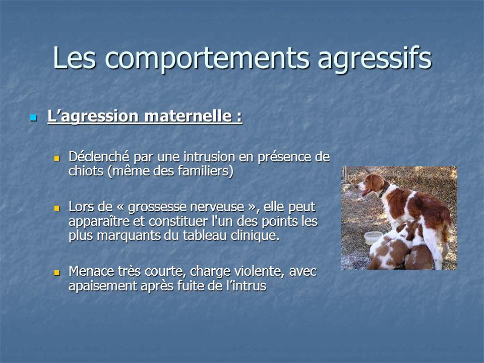 Lagression maternelle : Lagression maternelle : Déclenché par une intrusion en présence de chiots (même des familiers) Déclenché par une intrusion en