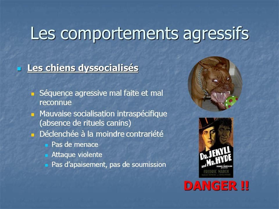 Les comportements agressifs Les chiens dyssocialisés Les chiens dyssocialisés Séquence agressive mal faite et mal reconnue Mauvaise socialisation intr