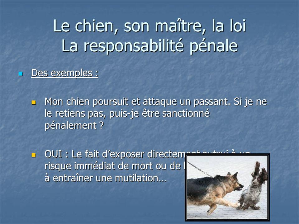 Le chien, son maître, la loi La responsabilité pénale Des exemples : Des exemples : Mon chien poursuit et attaque un passant. Si je ne le retiens pas,