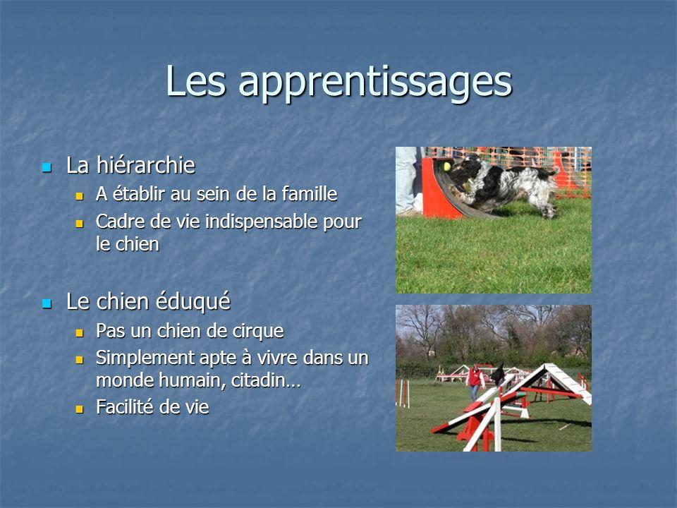 Les apprentissages La hiérarchie La hiérarchie A établir au sein de la famille A établir au sein de la famille Cadre de vie indispensable pour le chie
