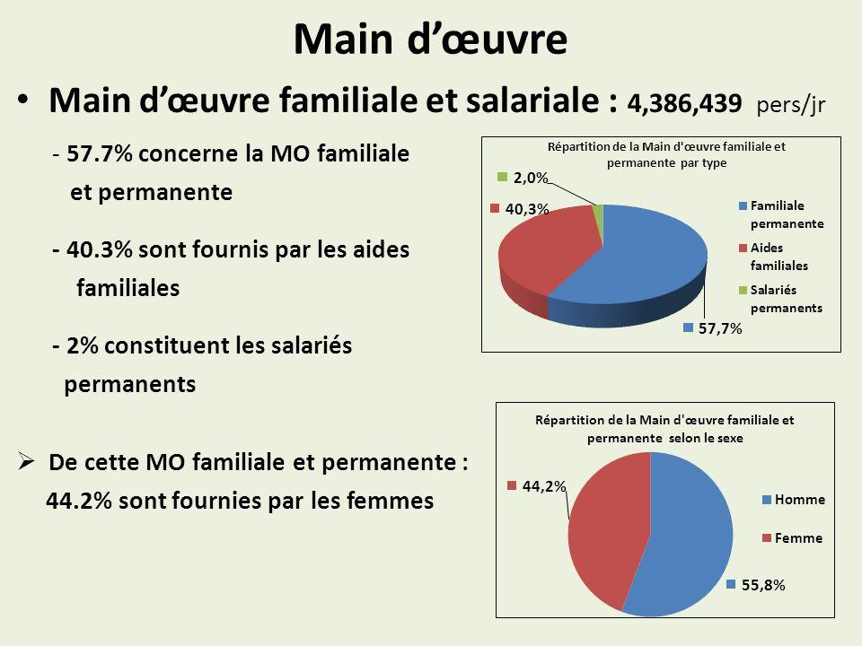 Main dœuvre Main dœuvre familiale et salariale : 4,386,439 pers/jr - 57.7% concerne la MO familiale et permanente - 40.3% sont fournis par les aides f