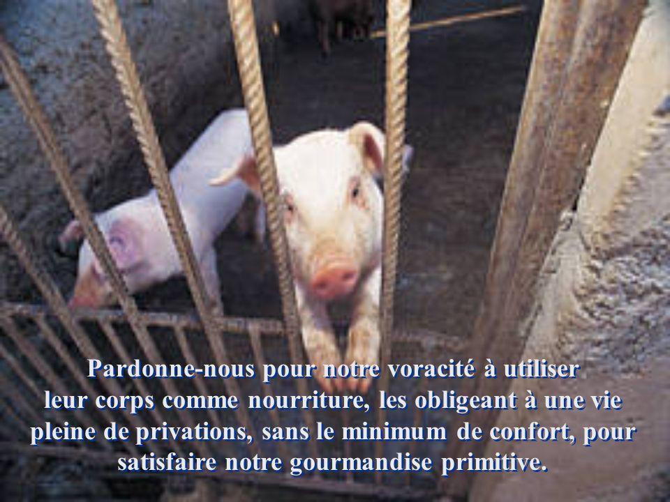 Nous demandons pardon de notre manque de conscience quand nous enfermons les animaux dans des prisons ou des cages, les privant du bien le plus précie