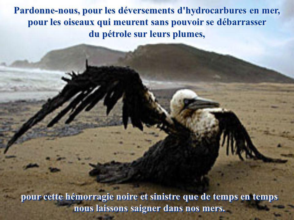 Pardonne-nous pour notre manque de miséricorde, pour la violation des sanctuaires écologiques, pour la déforestation, pour la pêche sans discernement