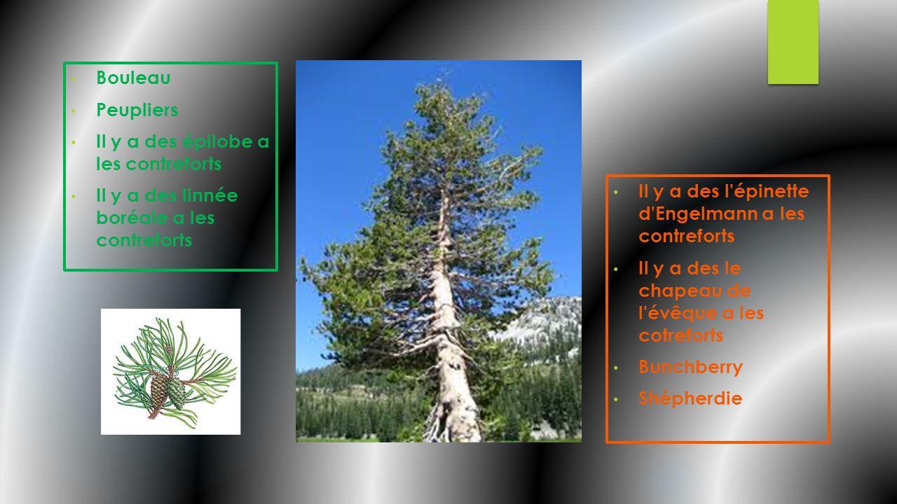 Contreforts Ressources Naturelles La végétation: forêts mixtes L Alberta a trois principales ressources primaires: 1.