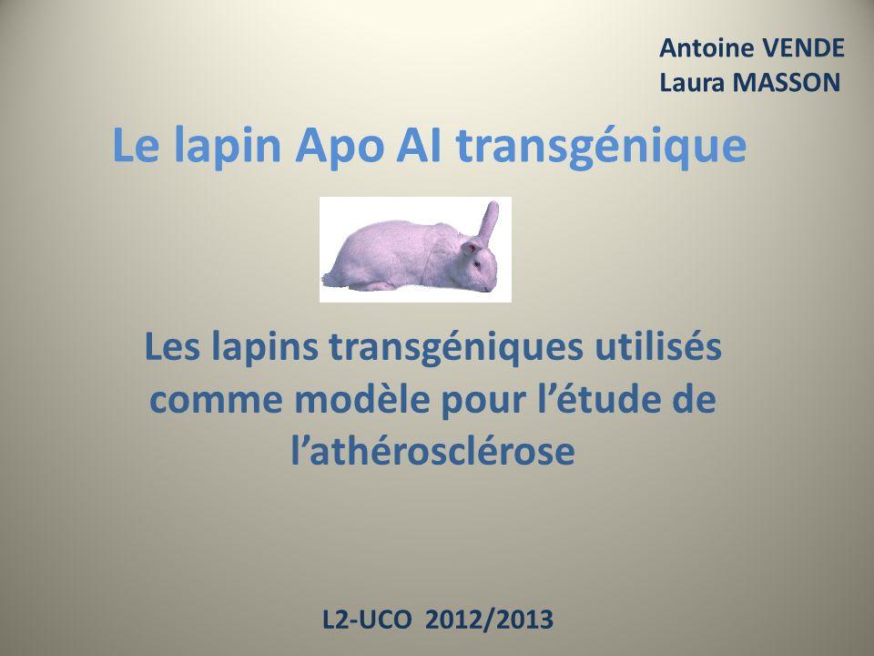 Le lapin Apo AI transgénique Les lapins transgéniques utilisés comme modèle pour létude de lathérosclérose Antoine VENDE Laura MASSON L2-UCO 2012/2013