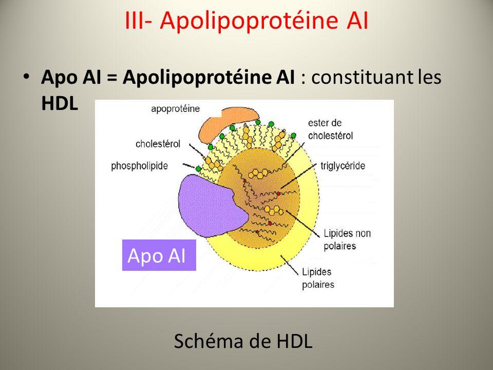 III- Apolipoprotéine AI Apo AI = Apolipoprotéine AI : constituant les HDL Schéma de HDL Apo AI