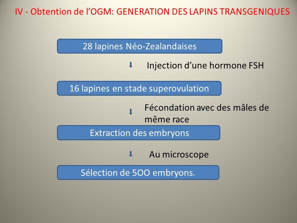 28 lapines Néo-Zealandaises 16 lapines en stade superovulation Extraction des embryons Fécondation avec des mâles de même race Sélection de 5OO embryons.