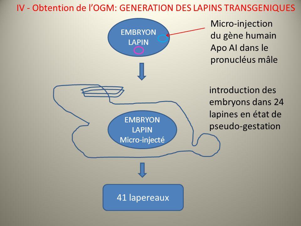 EMBRYON LAPIN Micro-injection du gène humain Apo AI dans le pronucléus mâle IV - Obtention de lOGM: GENERATION DES LAPINS TRANSGENIQUES EMBRYON LAPIN Micro-injecté introduction des embryons dans 24 lapines en état de pseudo-gestation 41 lapereaux