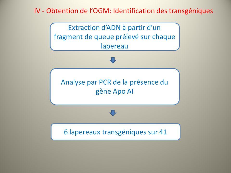 IV - Obtention de lOGM: Identification des transgéniques Extraction dADN à partir d un fragment de queue prélevé sur chaque lapereau Analyse par PCR de la présence du gène Apo AI 6 lapereaux transgéniques sur 41