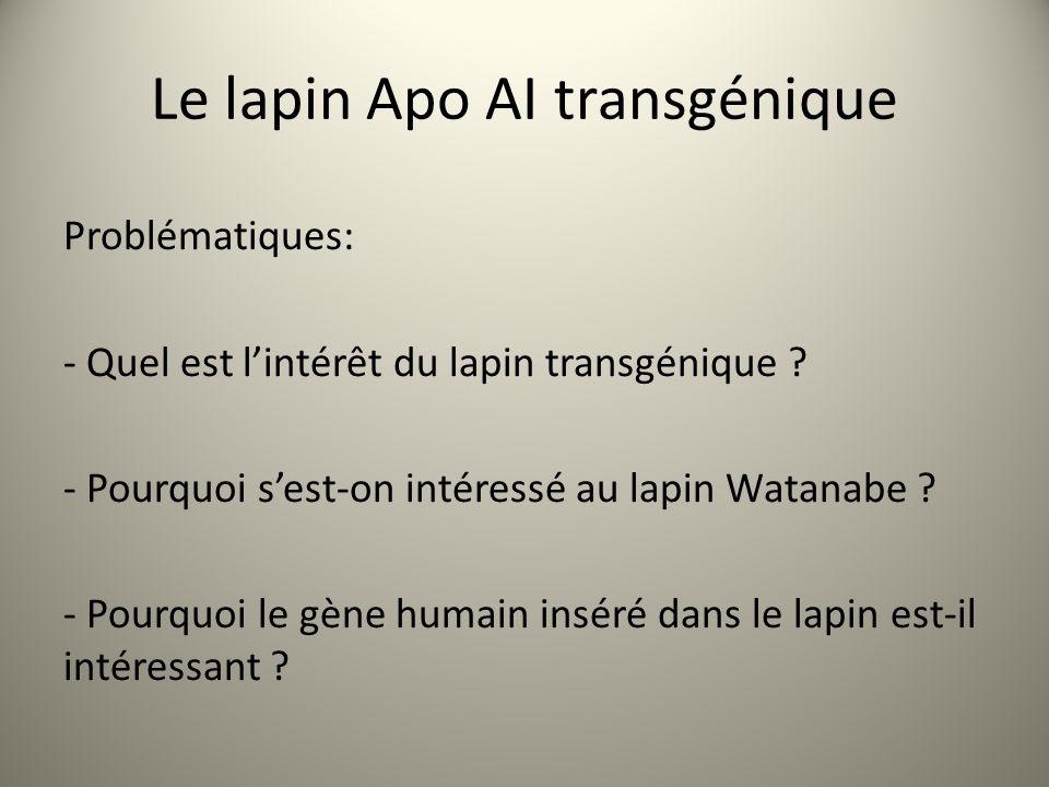 Le lapin Apo AI transgénique Problématiques: - Quel est lintérêt du lapin transgénique .