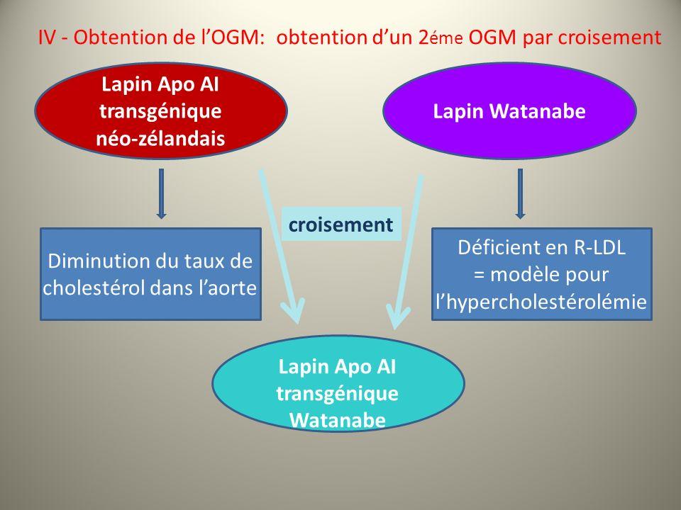 Diminution du taux de cholestérol dans laorte Lapin Watanabe Lapin Apo AI transgénique néo-zélandais Lapin Apo AI transgénique Watanabe croisement Déficient en R-LDL = modèle pour lhypercholestérolémie IV - Obtention de lOGM: obtention dun 2 éme OGM par croisement