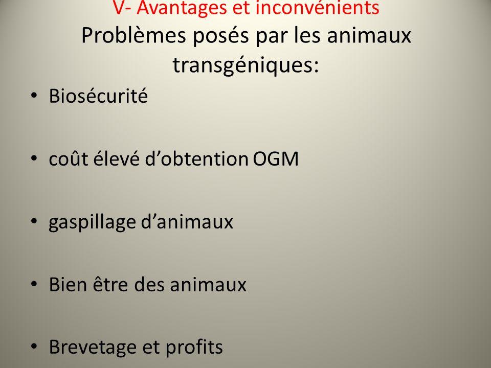 V- Avantages et inconvénients Problèmes posés par les animaux transgéniques: Biosécurité coût élevé dobtention OGM gaspillage danimaux Bien être des animaux Brevetage et profits