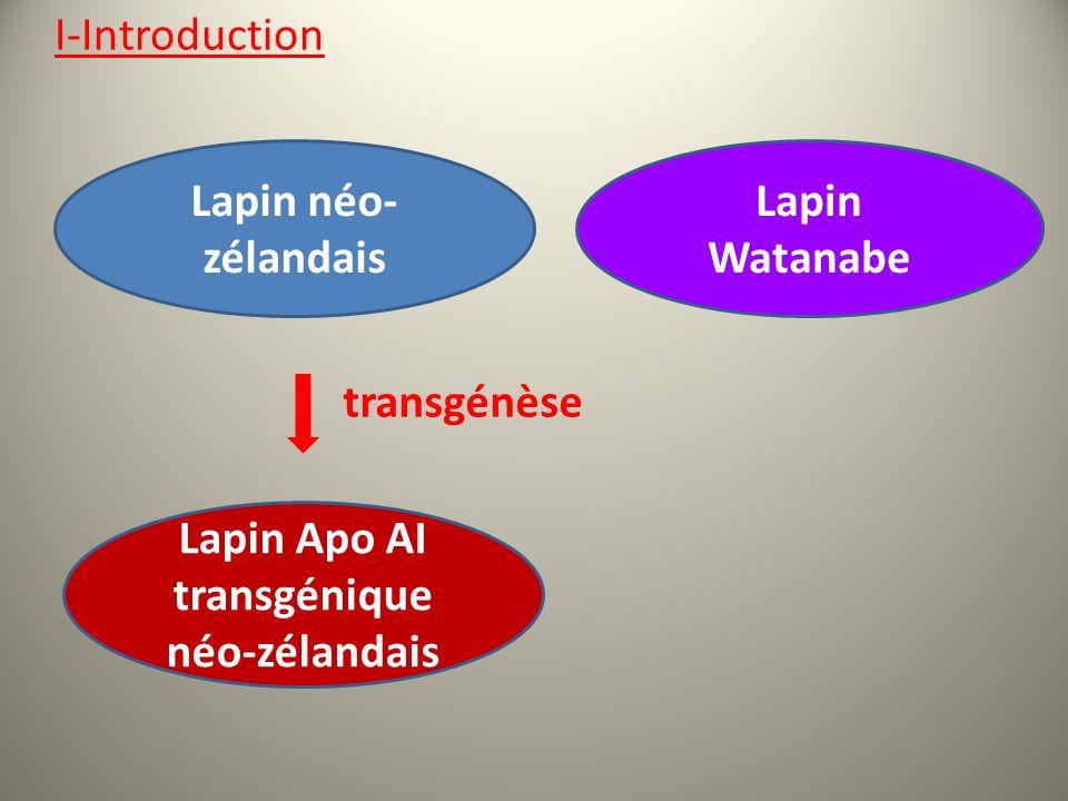Lapin néo- zélandais transgénèse Lapin Apo AI transgénique néo-zélandais Lapin Watanabe I-Introduction
