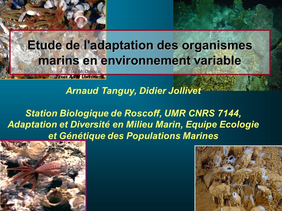 Etude de l'adaptation des organismes marins en environnement variable Arnaud Tanguy, Didier Jollivet Station Biologique de Roscoff, UMR CNRS 7144, Ada