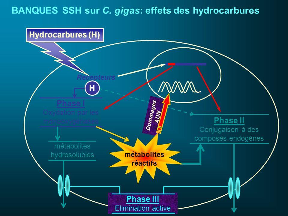 Phase I Oxydation par les monooxygénases Récepteurs Phase II Conjugaison à des composés endogènes Dommages ADN Phase III Elimination active métabolite