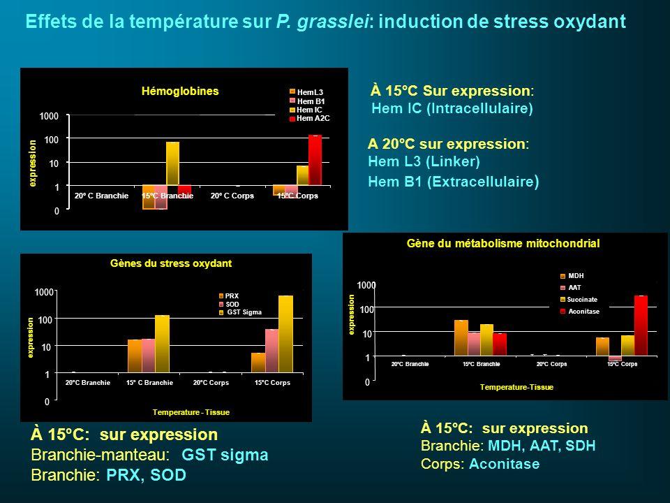 Effets de la température sur P. grasslei: induction de stress oxydant À 15°C Sur expression: Hem IC (Intracellulaire) A 20°C sur expression: Hem L3 (L