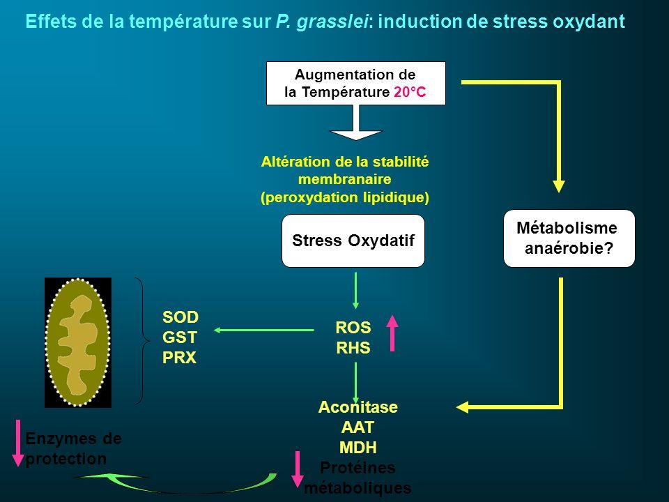 Augmentation de la Température 20°C Stress Oxydatif Altération de la stabilité membranaire (peroxydation lipidique) SOD GST PRX ROS RHS Enzymes de pro