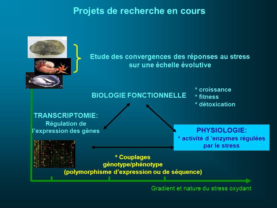 BIOLOGIE FONCTIONNELLE TRANSCRIPTOMIE: Régulation de lexpression des gènes PHYSIOLOGIE: * activité d enzymes régulées par le stress * Couplages génoty