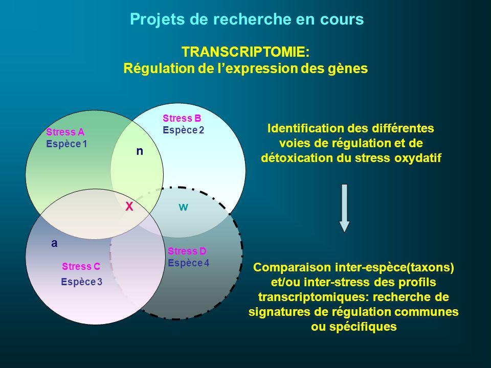 TRANSCRIPTOMIE: Régulation de lexpression des gènes Identification des différentes voies de régulation et de détoxication du stress oxydatif Comparais