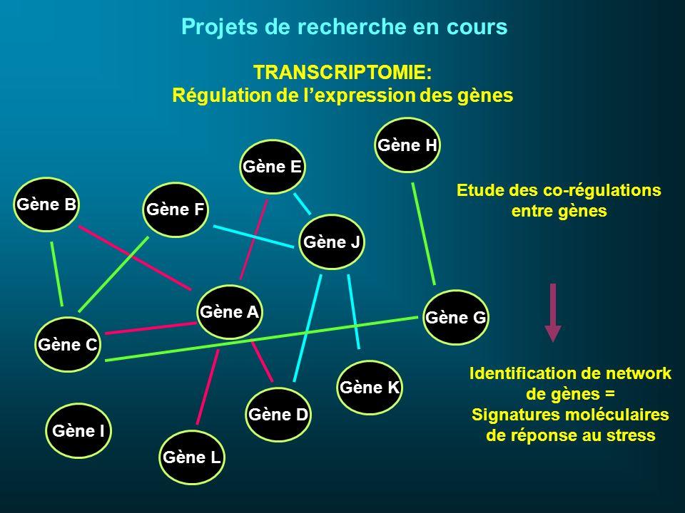 Gène A Gène D Gène J Gène E Gène K Gène G Gène H Gène F Gène C Gène L Gène I Gène B Etude des co-régulations entre gènes Identification de network de