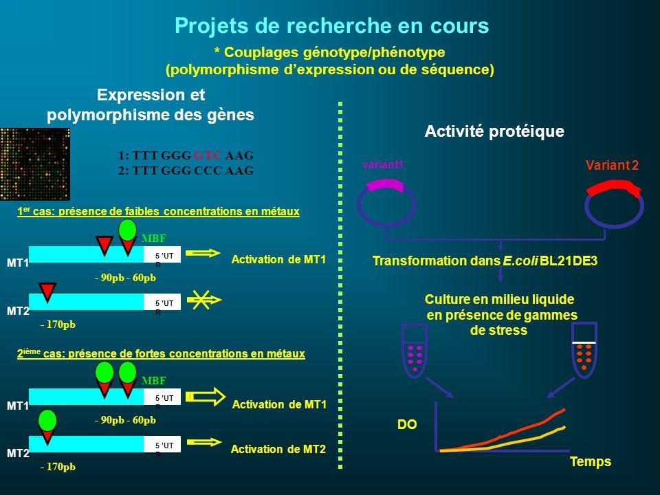 * Couplages génotype/phénotype (polymorphisme dexpression ou de séquence) Projets de recherche en cours Expression et polymorphisme des gènes Activité