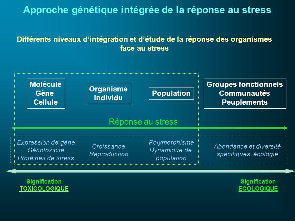 Molécule Gène Cellule Organisme Individu Population Groupes fonctionnels Communautés Peuplements Expression de gène Génotoxicité Protéines de stress C