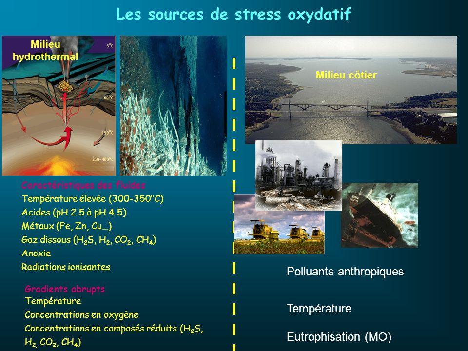 Les sources de stress oxydatif Caractéristiques des fluides Température élevée (300-350°C) Acides (pH 2.5 à pH 4.5) Métaux (Fe, Zn, Cu…) Gaz dissous (