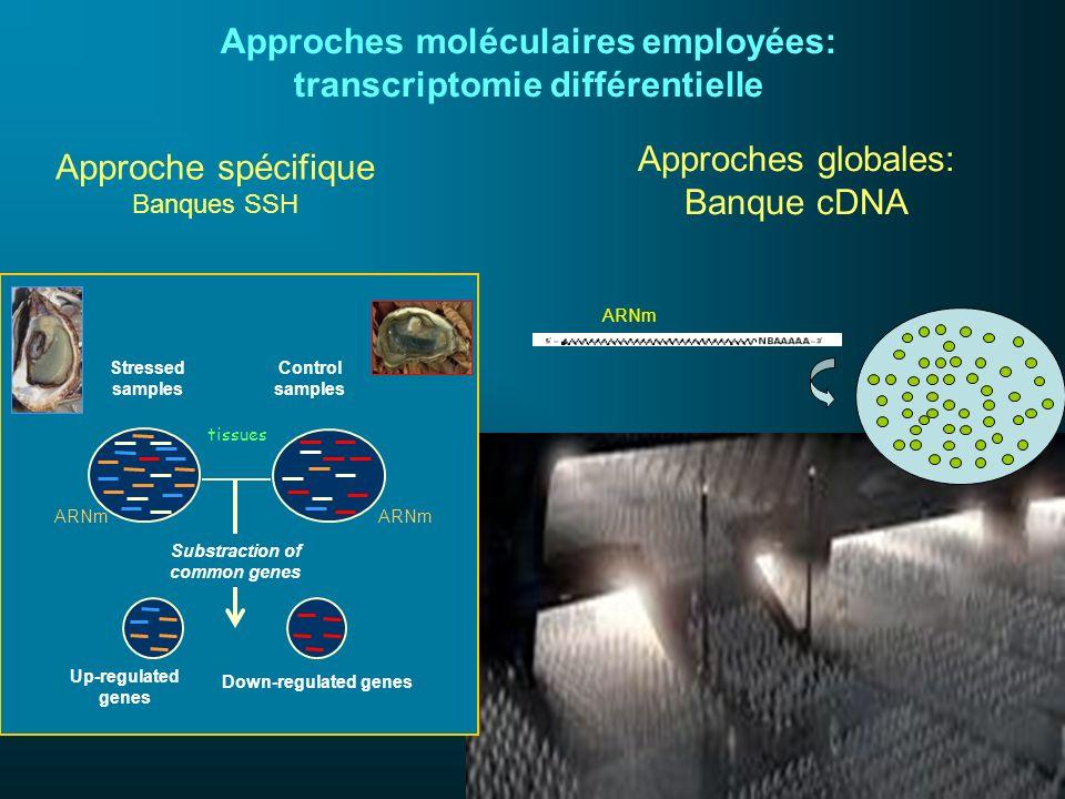 Banques cDNA construites en 2005-2007: ESTs (cDNA libraries): * 9000 unigenes chez Crassostrea gigas * 3500 unigenes chez Mytilus galloprovincialis * 1800 unigenes chez Ruditapes decussatus * 2500 unigenes chez Bathymodiolus azoricus * 2000 unigenes chez Paralvinella grasslei * 9000 unigenes on Alvinella pompejana * 300 unigenes on Lepetodrillus elevatus Puce ADN disponibles ou en construction : * « gigas » micro-array (1500 spots) dédiée au stress: utilisée pour des analyses comparatives en milieu anthropisé.