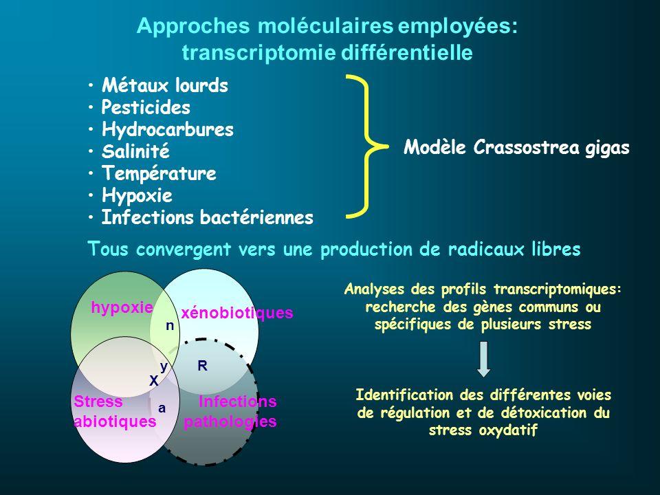 Métaux lourds Pesticides Hydrocarbures Salinité Température Hypoxie Infections bactériennes Tous convergent vers une production de radicaux libres Inf