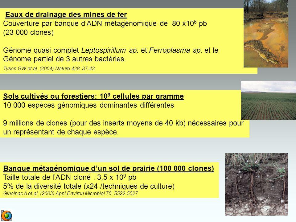 Eaux de drainage des mines de fer Couverture par banque dADN métagénomique de 80 x10 6 pb (23 000 clones) Génome quasi complet Leptospirillum sp.