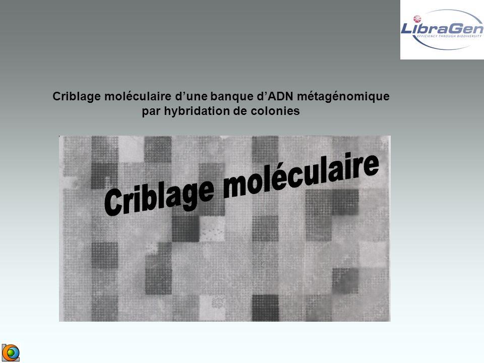 Criblage moléculaire dune banque dADN métagénomique par hybridation de colonies