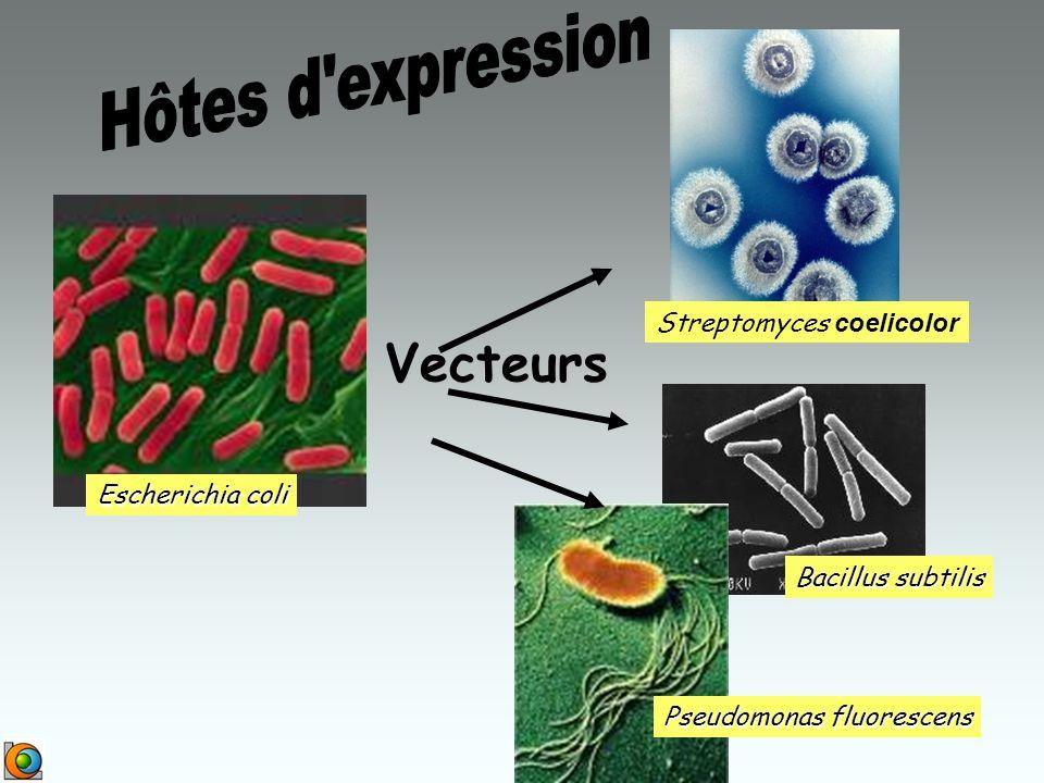 Streptomyces coelicolor Bacillus subtilis Pseudomonas fluorescens Escherichia coli Vecteurs