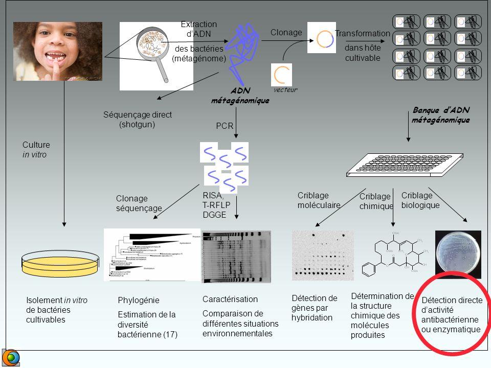 Extraction dADN des bactéries (métagénome) ADN métagénomique vecteur Clonage Transformation dans hôte cultivable Banque dADN métagénomique PCR Clonage séquençage RISA, T-RFLP DGGE Criblage moléculaire Criblage chimique Criblage biologique Isolement in vitro de bactéries cultivables Phylogénie Estimation de la diversité bactérienne (17) Caractérisation Comparaison de différentes situations environnementales Culture in vitro Détermination de la structure chimique des molécules produites Détection directe dactivité antibactérienne ou enzymatique Détection de gènes par hybridation Séquençage direct (shotgun)