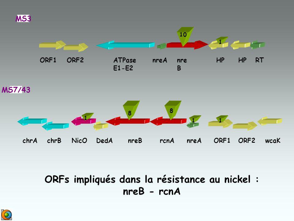ORF1ORF2ATPase E1-E2 nreAnre B HP RT MS3 DedANicOchrBnreBrcnAnreAORF1ORF2chrAwcaK MS7/43 ORFs impliqués dans la résistance au nickel : nreB - rcnA 10 1 8 1 8 1 1